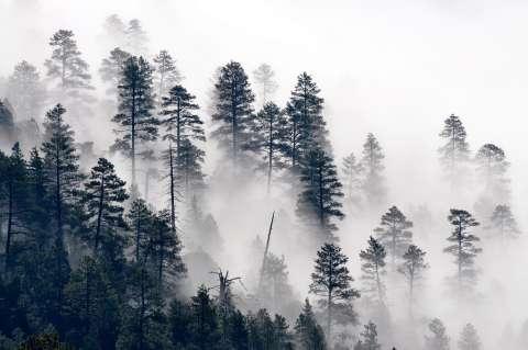 De mist tussen mij en de wereld is opgetrokken - Elke Geurts