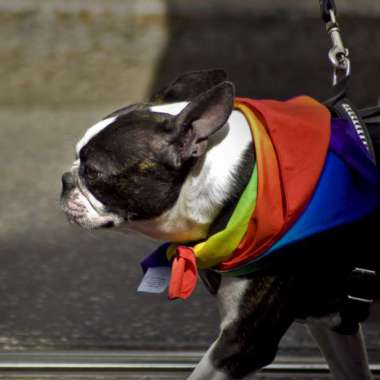 Homo's en honden  - Erik Jan Harmens