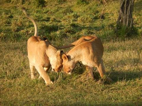 Na Kenia - Elke Geurts