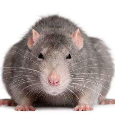 Round-Up #58: Ben je van de ratten besnuffeld?